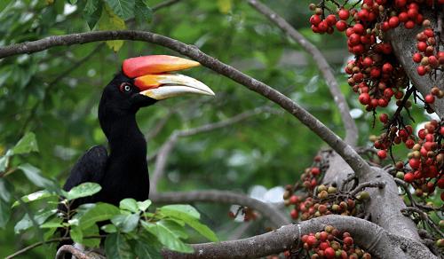 Pohon Ara Bisa Selamatkan Keanekaragaman Hayati