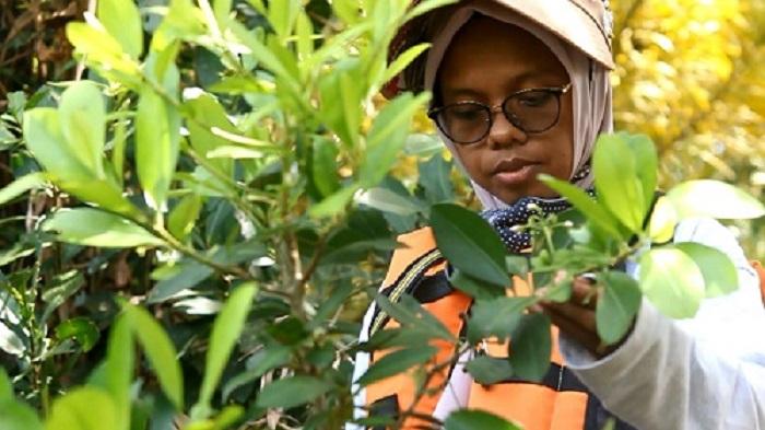 Saudah, Etnobotani dan Gambut Aceh