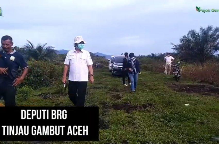Deputi BRG Tinjau Gambut Aceh