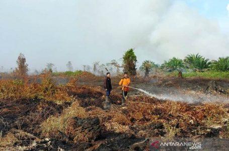Petugas memadamkan api yang membakar lahan gambut di Gampong Pulo, Kecamatan Arongan Lambalek, Kabupaten Aceh Barat. FOTO: DEDI ISKANDAR/ANTARA.